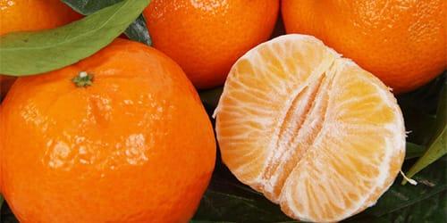 Mandarinski snovi iz snova